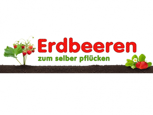 Aufkleber ERDBEEREN SELBER PFLÜCKEN Werbung Feld