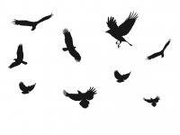 9 x VOGEL AUFKLEBER - Vogelschutzaufkleber für Wintergärten oder Zimmerfenster